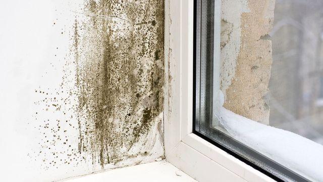 Comment se débarrasser des moisissures sur les murs ?